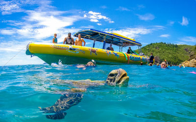 Ocean Rafting-Whitsunday Sailing Day Tour - swim