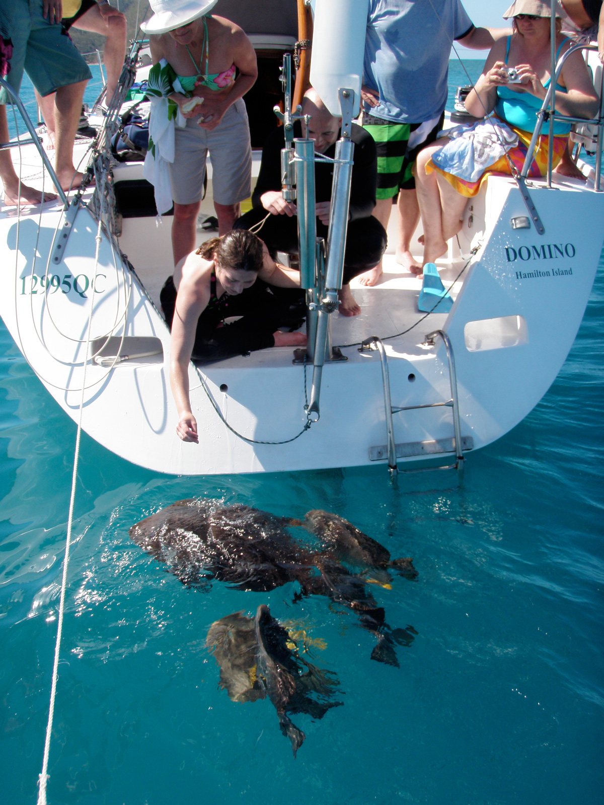 SV Domino turtles off the aft deck