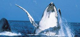 Seasons -Whitsundays Island - Whale Jump