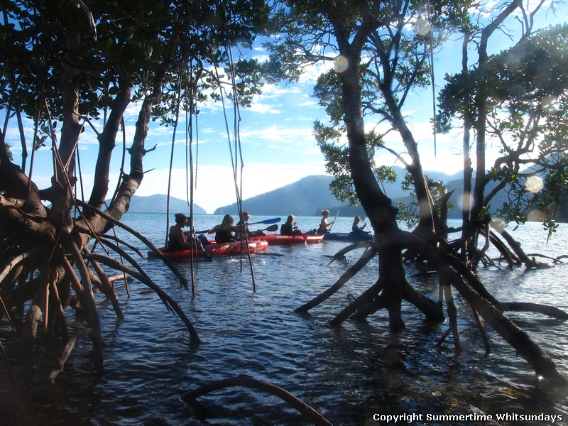 Summertime Overnight Tour - Whitsundays - kayaks through the mangroves